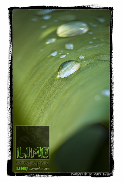 MRN-2012-009-0061-Edit