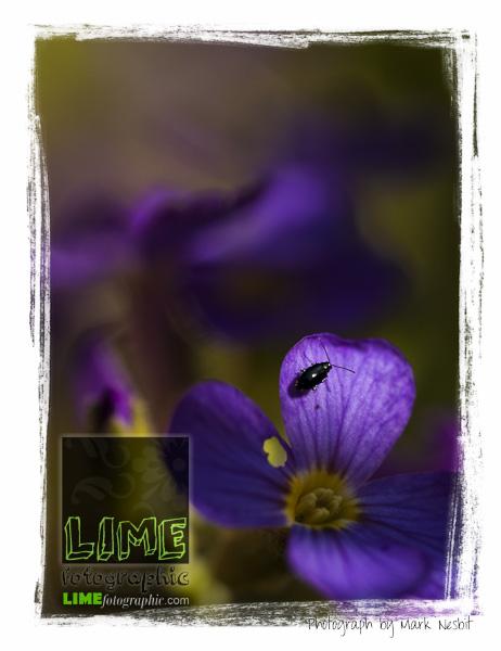 MRN-2012-009-0066-Edit