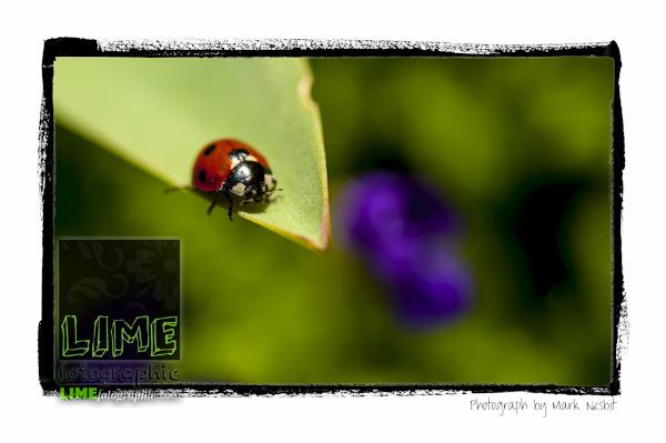 MRN-2012-009-0109-Edit