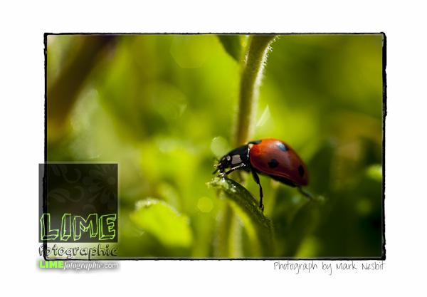MRN-2012-009-0120-Edit